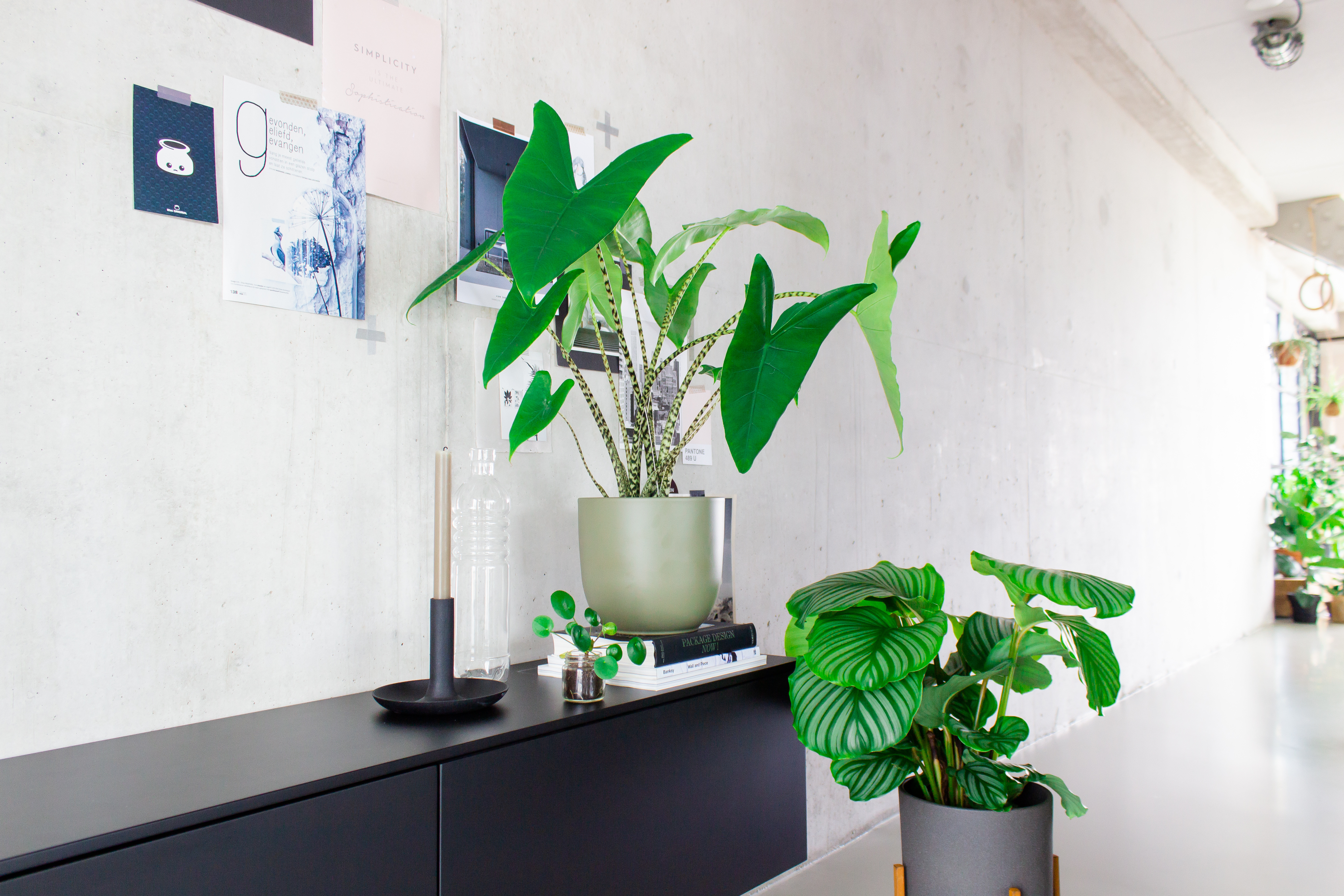 Planten bestellen Plantsome | Urban Jungle | Stek Magazine